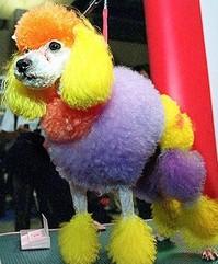 rainbow-poodle.jpg