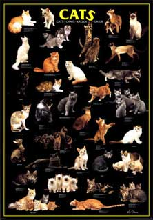 cats-poster.jpg