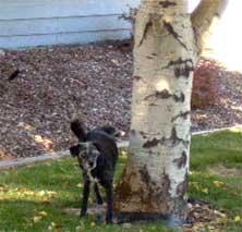 dog-tree.jpg