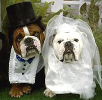 dog-wedding.jpg
