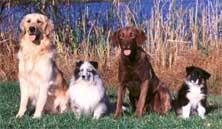 four-dogs.jpg