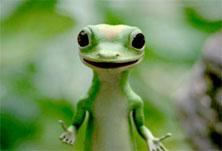geico-lizard.jpg