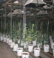 grow-house.jpg