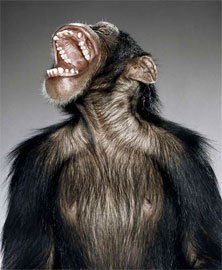 howling-monkey.jpg