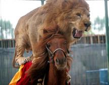 lion_riding_horse.jpg