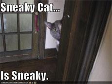 sneakyCat.jpg
